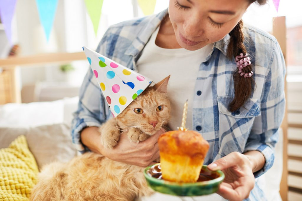adoptable cat birthday party