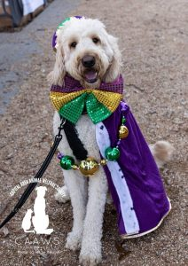 dog dressed up at the krewe of mutts
