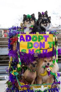 CAAWS-mystic-krewe-of-mutts_3