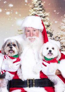 santa with pups at santa caaws event
